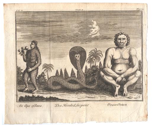 mardikers at batavia and an ape of java, 1752